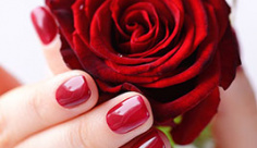 عکس یک شاخه گل رز قرمز