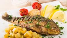 عکس تبلیغاتیخوراک ماهی