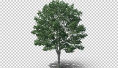عکس برش خورده دوربری درخت