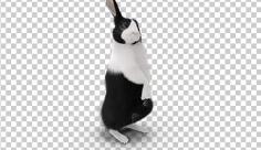 عکس برش خورده سه بعدی خرگوش سیاه و سفید