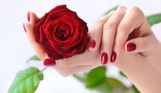 عکس گل رز قرمز قشنگ