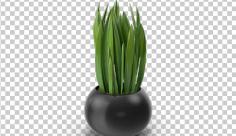 عکس برش خورده سه بعدی گل در گلدان سیاه