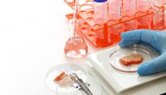 عکس آزمایش گوشت
