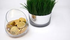 عکس سکه و سبزه