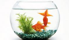 عکس ماهی نوروز