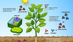 وکتور گیاه