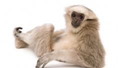 عکس تبلیغاتی میمون دست دراز