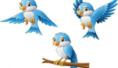 وکتور کارتونی پرندگان