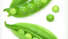 وکتور کاراکتر سبزیجات نخود فرنگی