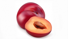 وکتور میوه