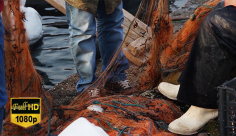فوتیج ویدیویی تور ماهیگیری