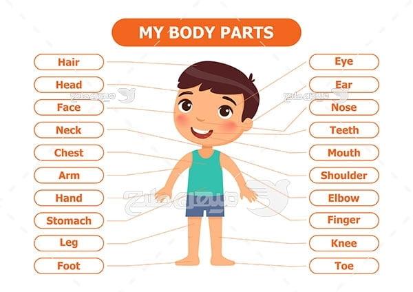 وکتور  آموزش اعضای بدن به زبان انگلیسی