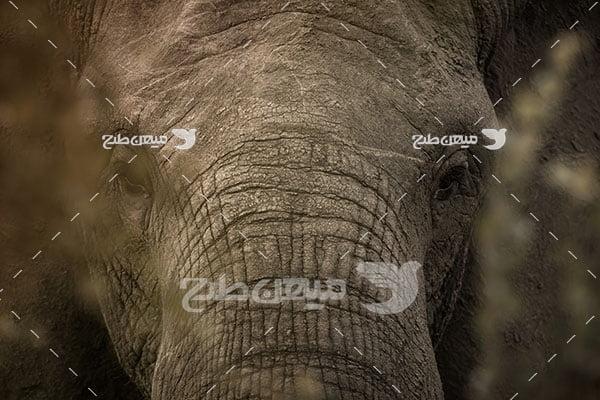 عکس تبلیغاتی فیل خاکستری