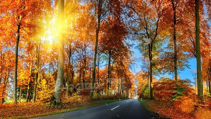 عکس تبلیغاتی طبیعت و مسیر خزان