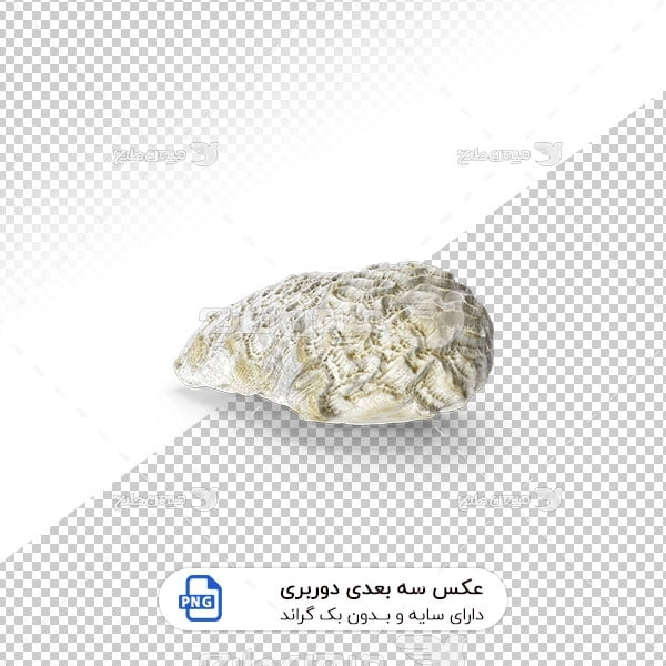 عکس برش خورده سه بعدی اسفنج دریایی سفید