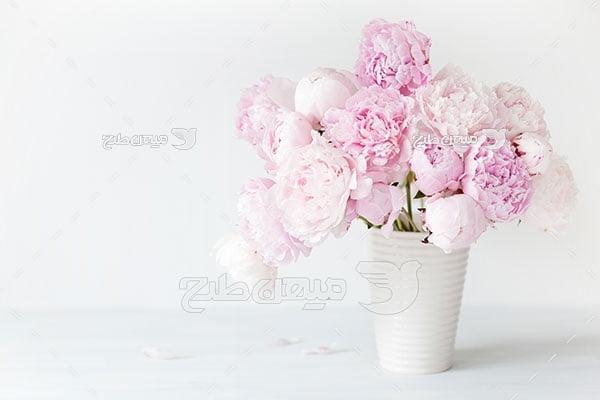 عکس گل در گلدان سفید