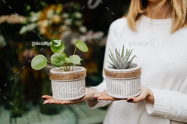 عکس گلدان کاکتوس