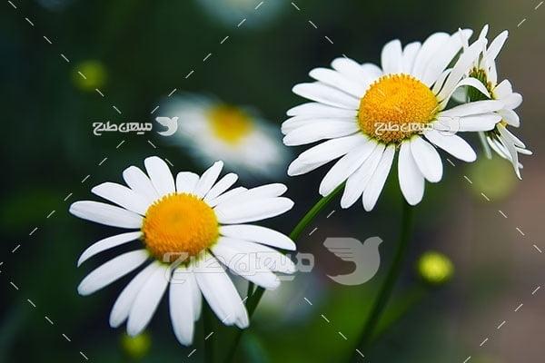 عکس نمای زیبا از شاخه گل مروارید