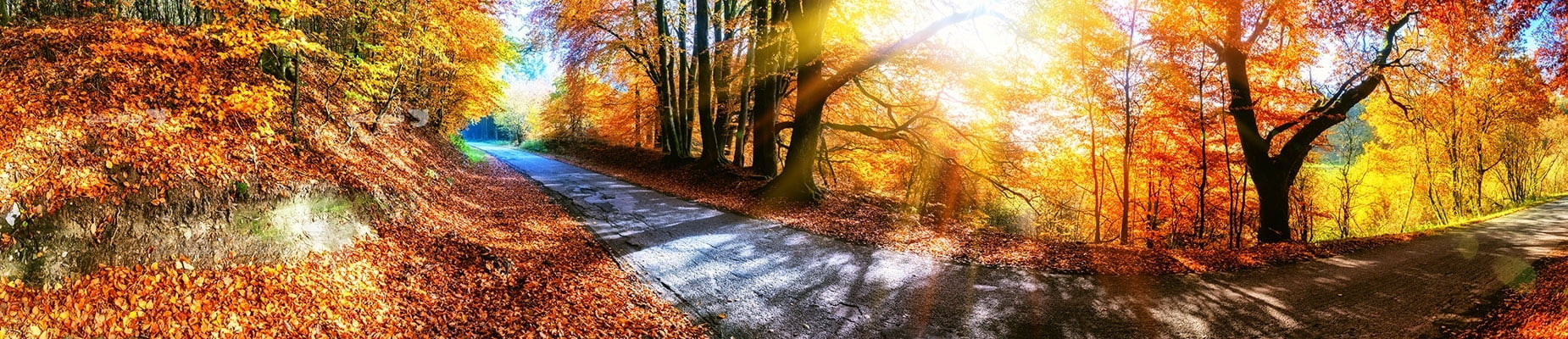 عکس تبلیغاتی طبیعت عکاسی حرفه ای در پاییز