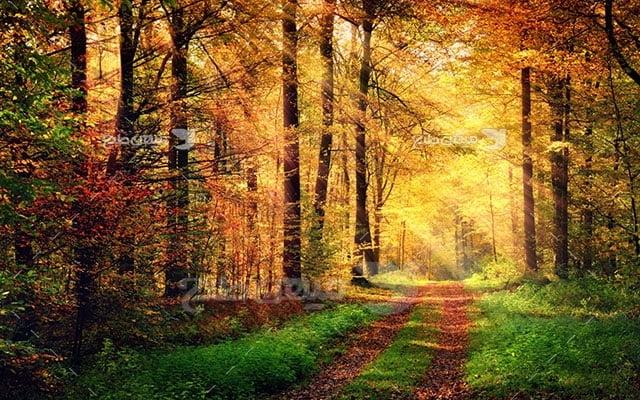 عکس تبلیغاتی طبیعت جاده سبز