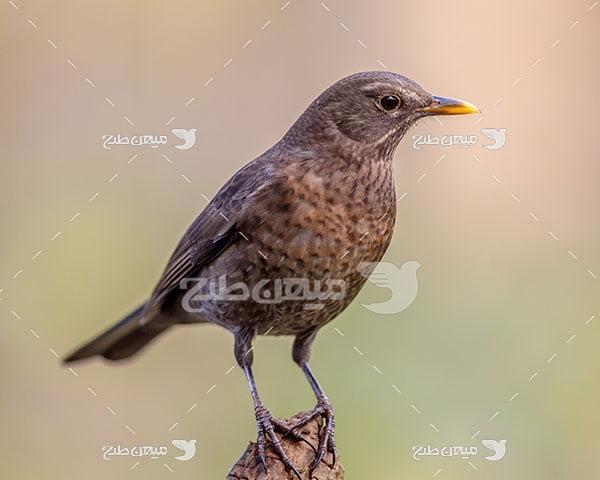 عکس تبلیغاتی پرندگان کوچک