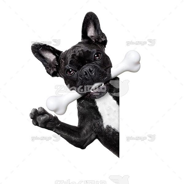 عکس سگ خانگی