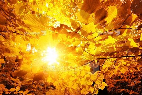 عکس تبلیغاتی طبیعت برگ زرد