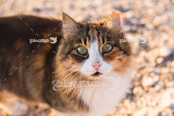 عکس تبلیغاتی گربه پشمالو