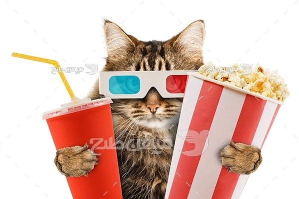 عکس گربه فیلم بین