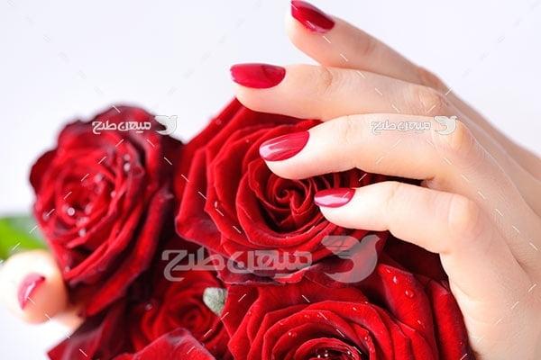 عکس شاخه گل های رز قرمز