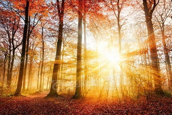 عکس تبلیغاتی طبیعت نور خورشید پاییزی