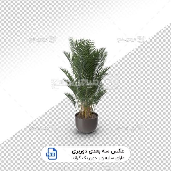 عکس برش خورده سه بعدی گیاه درخت نخل