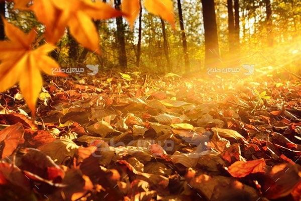 عکس تبلیغاتی طبیعت و برگ ریزان درخت