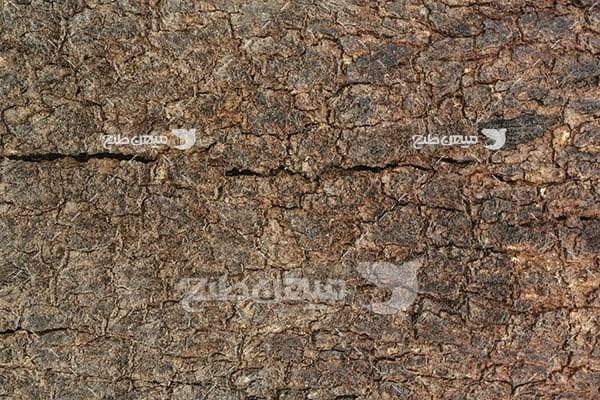 عکس پوست درخت