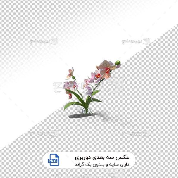 عکس برش خورده سه بعدی گل بهاری