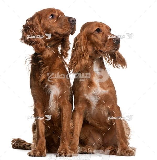 عکس تبلیغاتی سگ قهوه ای