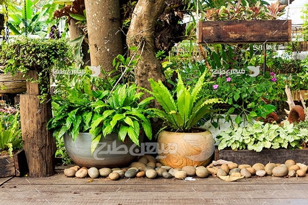 عکس باغچه گل و گلدان