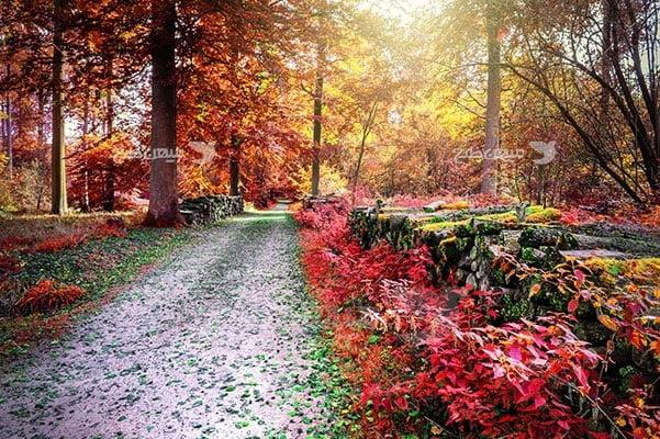 عکس طبیعت جادهدر جنگل