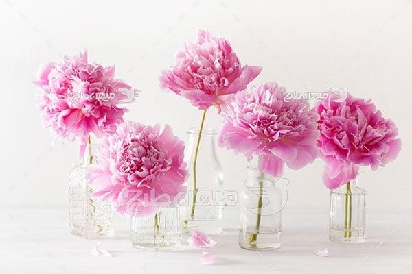 عکس گل پائونیا در لیوان شیشه ای
