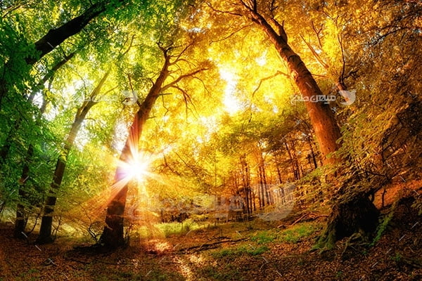 عکس تبلیغاتی طبیعت جنگل پاییزی