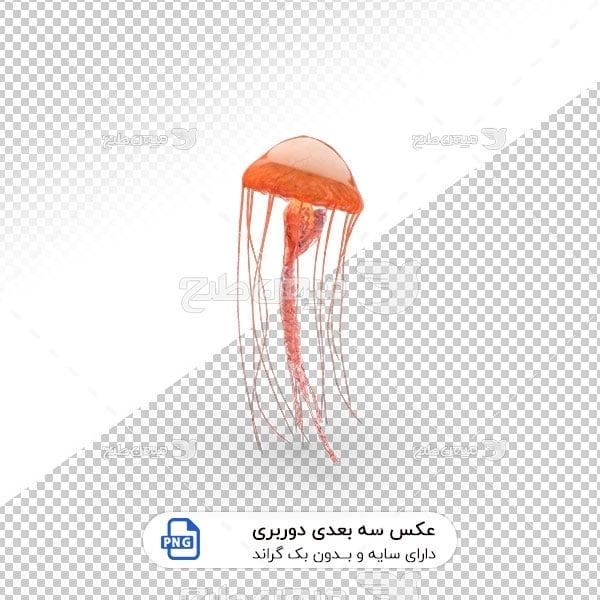 عکس برش خورده سه بعدی عروس دریایی نارنجی