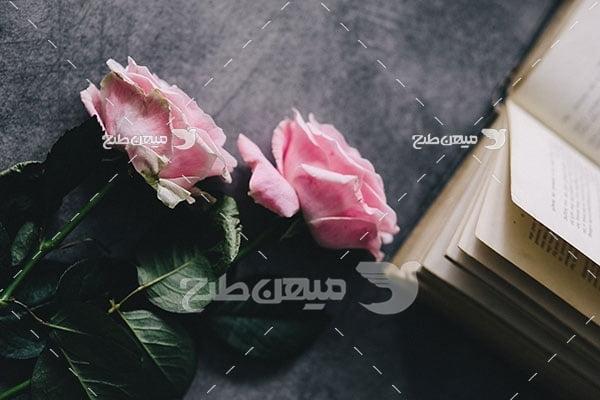 عکس شاخه گل رز صورتی
