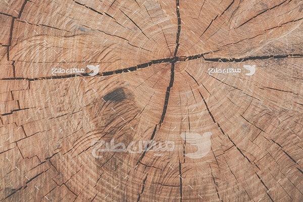 عکس تنه درخت