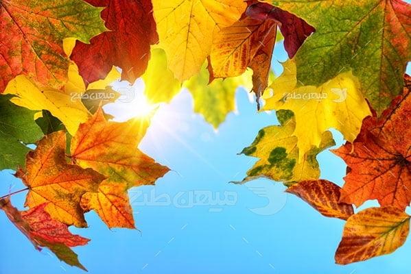 عکس تبلیغاتی طبیعت برگ های رنگی