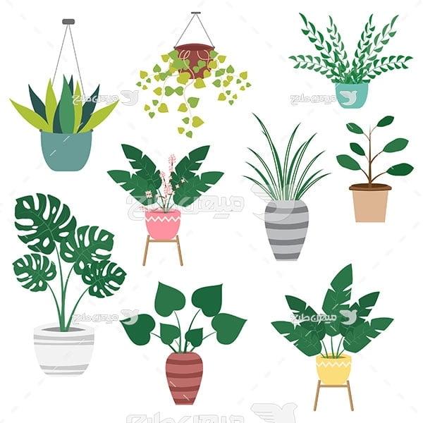 وکتور انواع گیاهان آپارتمانی