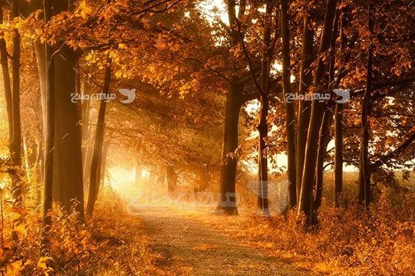عکس عکس های تبلیغاتی طبیعت پاییز