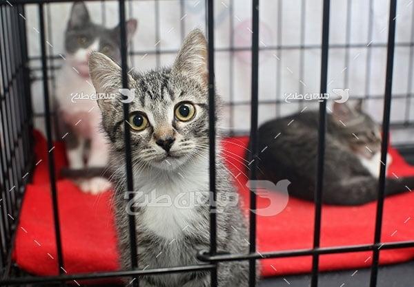 عکس تبلیغاتی گربه های ملوس