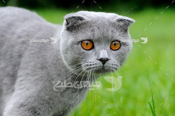 عکس تبلیغاتی گربه خاکستری