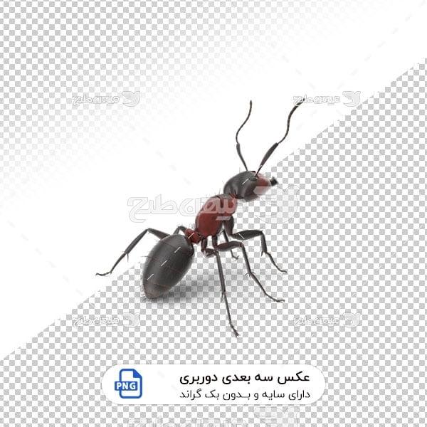 عکس برش خورده سه بعدی مورچه قرمز خاکی