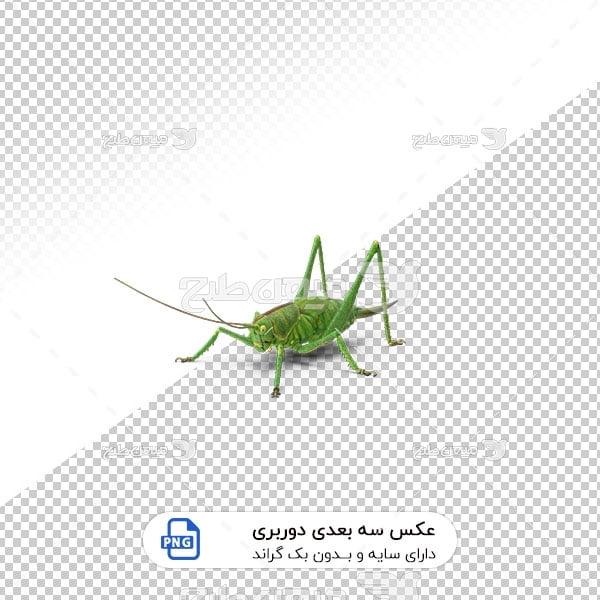 عکس برش خورده سه بعدی ملخ سبز